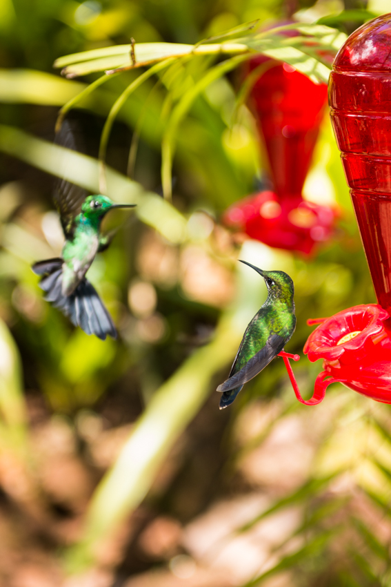 La Paz Hummingbirds